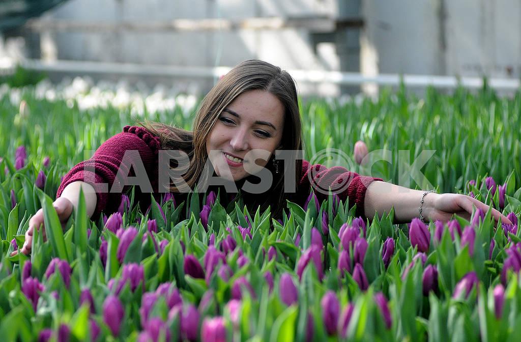 Tulips — Image 69536