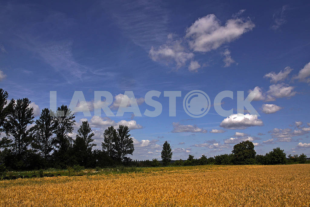 A beautiful country landscape with a wheat fields — Image 69608