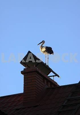 White stork standing on the chimney