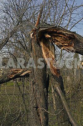 Зруйноване дерево