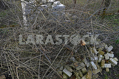 Many cut branches