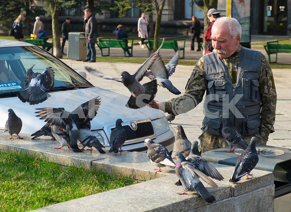 A man is feeding pigeons — Image 69958