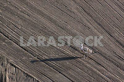Lonely seagull on cleaned by a tractor sand on the Mediterranean