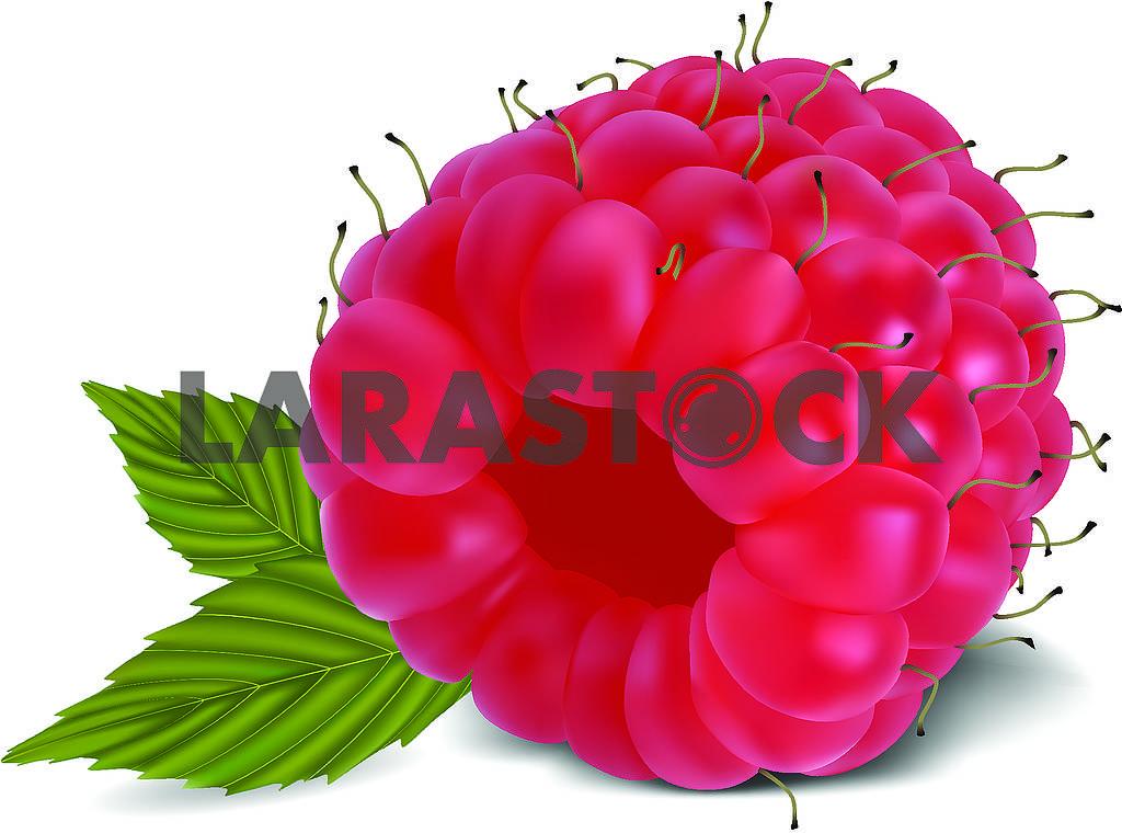 Raspberries — Image 70210