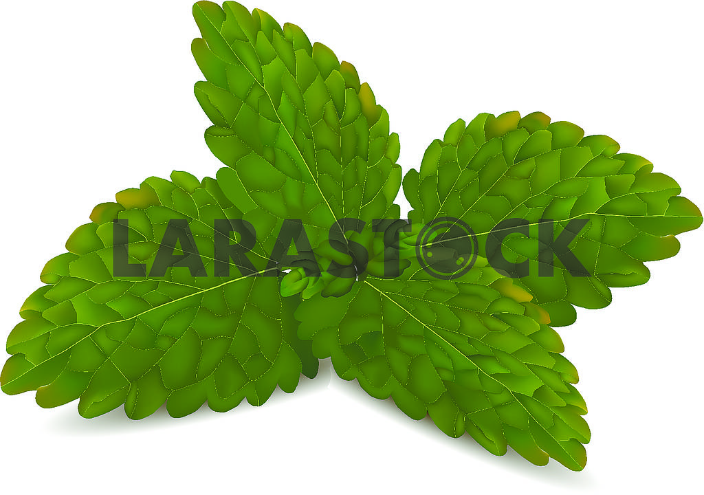 Mint leaves — Image 70269