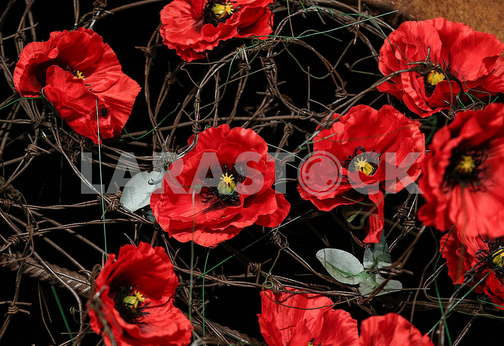 Red poppies — Image 70588