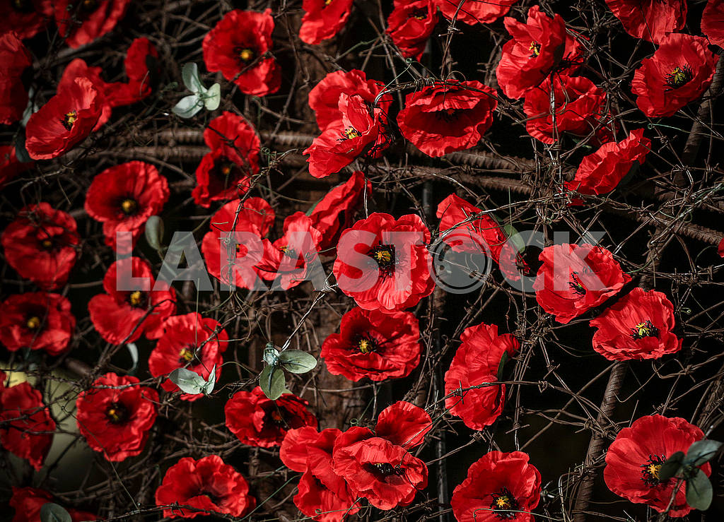 Red poppies — Image 70590