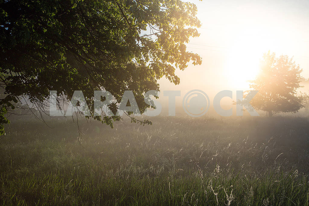 Beautiful natural summer background. the sun's rays pass through a tree — Image 70698