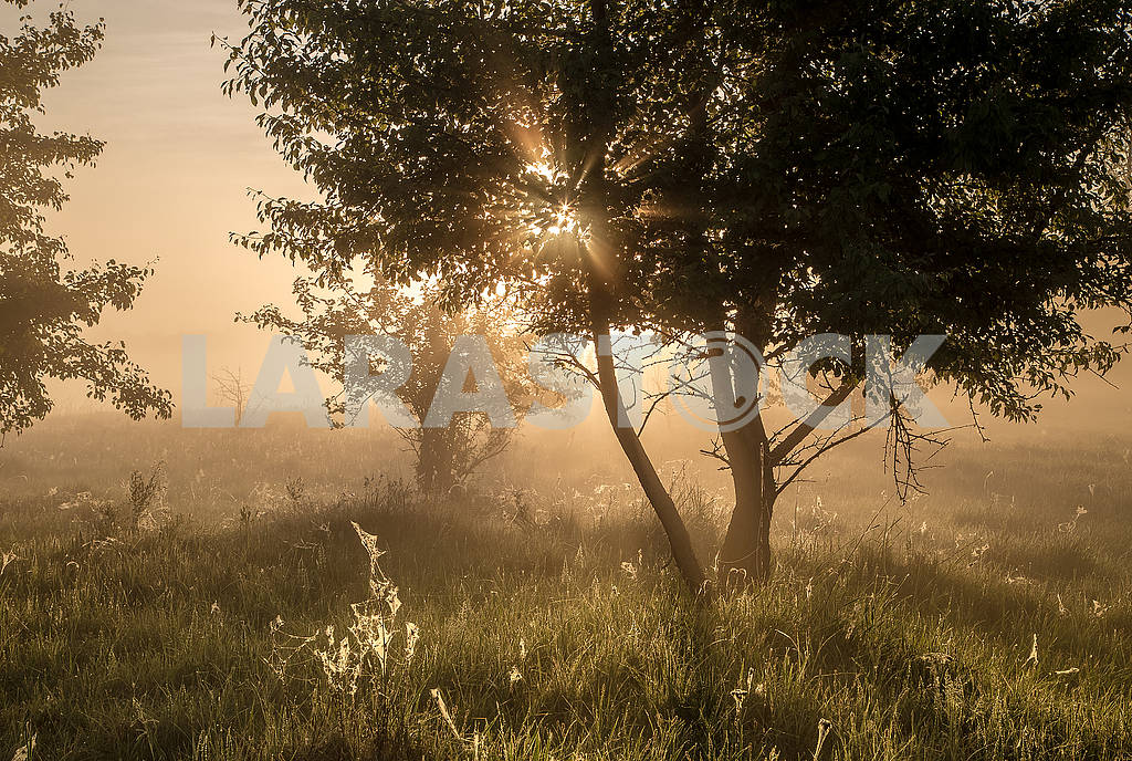 Beautiful natural summer background. the sun's rays pass through a tree — Image 70699