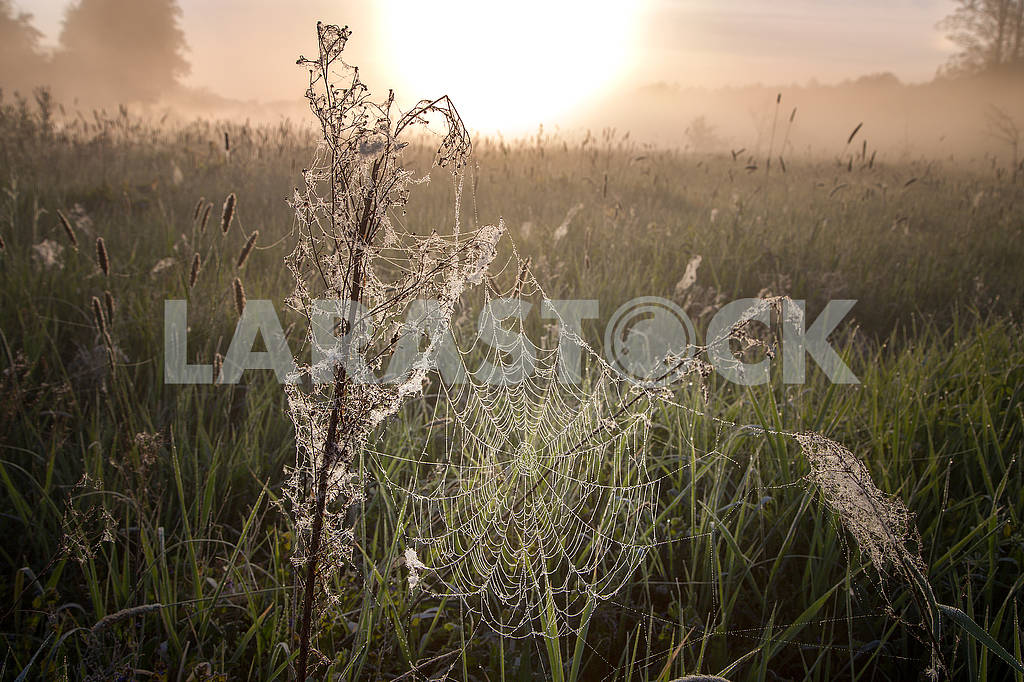 Beautiful natural summer background. the sun's rays pass through fog and tree. closeup drops of dew on the spiderweb at sunset sunrise — Image 70700