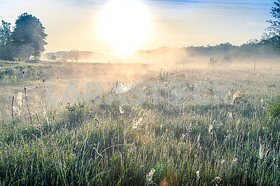 beautiful natural summer background. Dawn with mist over the river