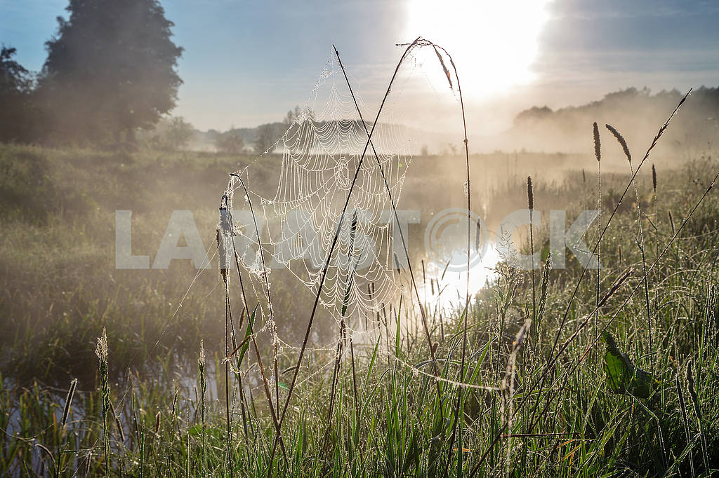 Beautiful natural summer background. the sun's rays pass through fog and tree. closeup drops of dew on the spiderweb at sunset sunrise — Image 70702