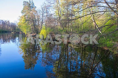 Lake and forest in Pushcha Vodice