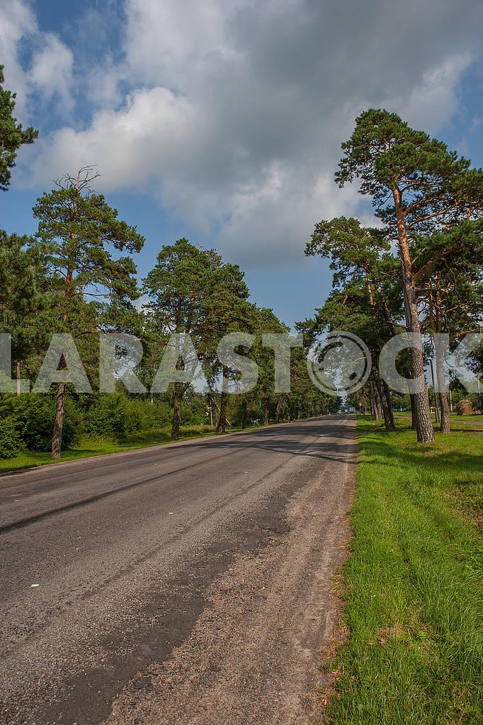 Деревья вдоль дороги — Изображение 70774