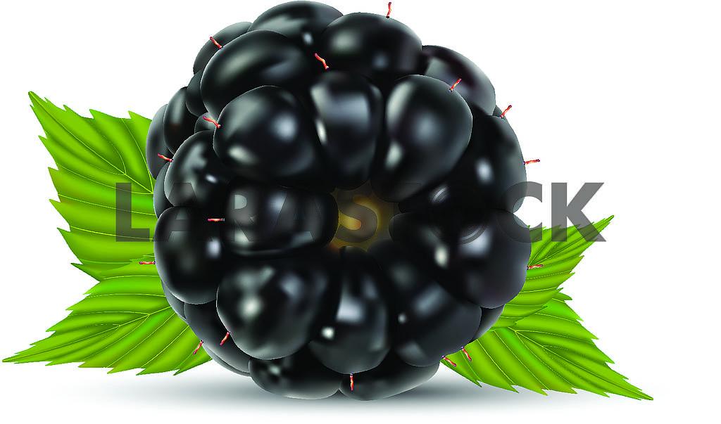 Blackberry — Image 70832