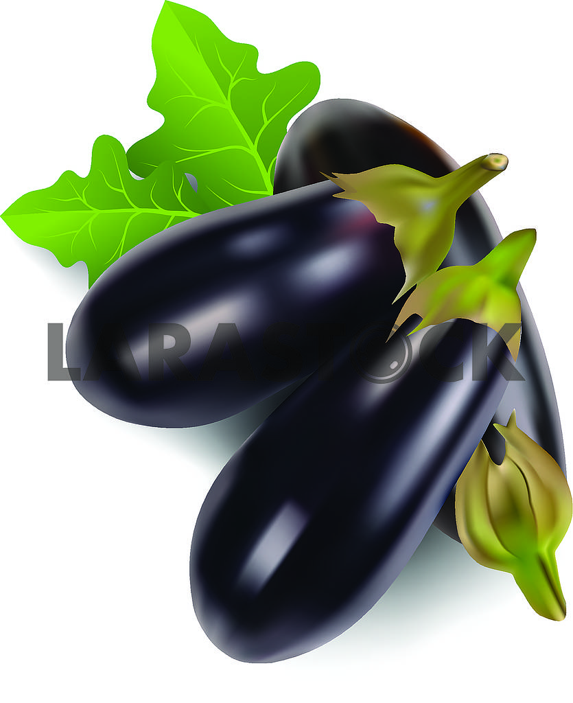 Eggplant — Image 70833