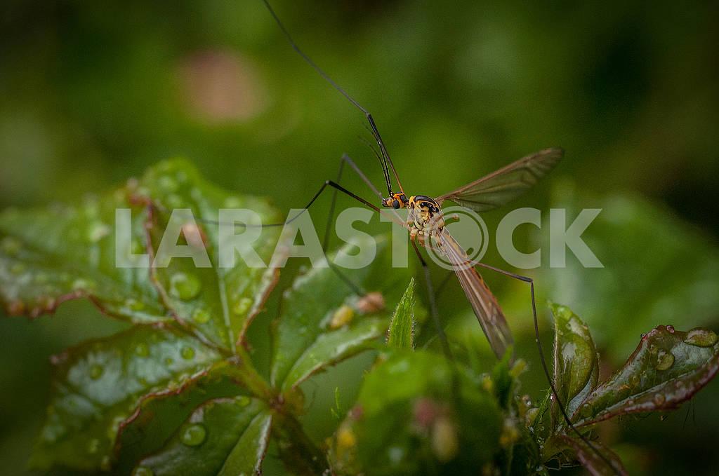 Комар — Изображение 71085
