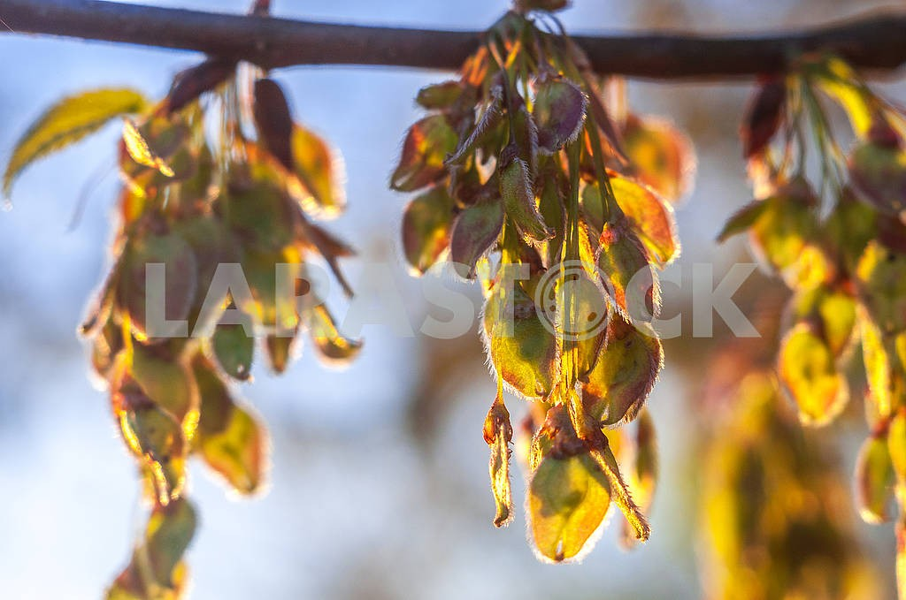 Tree blooms — Image 71094