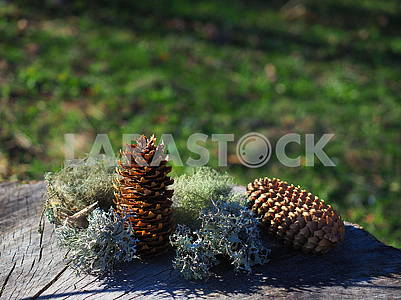 Cones and moss
