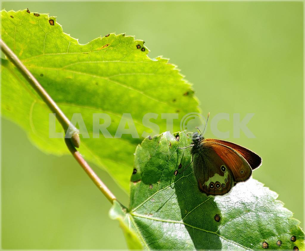 A green butterfly isolated on white — Image 71425