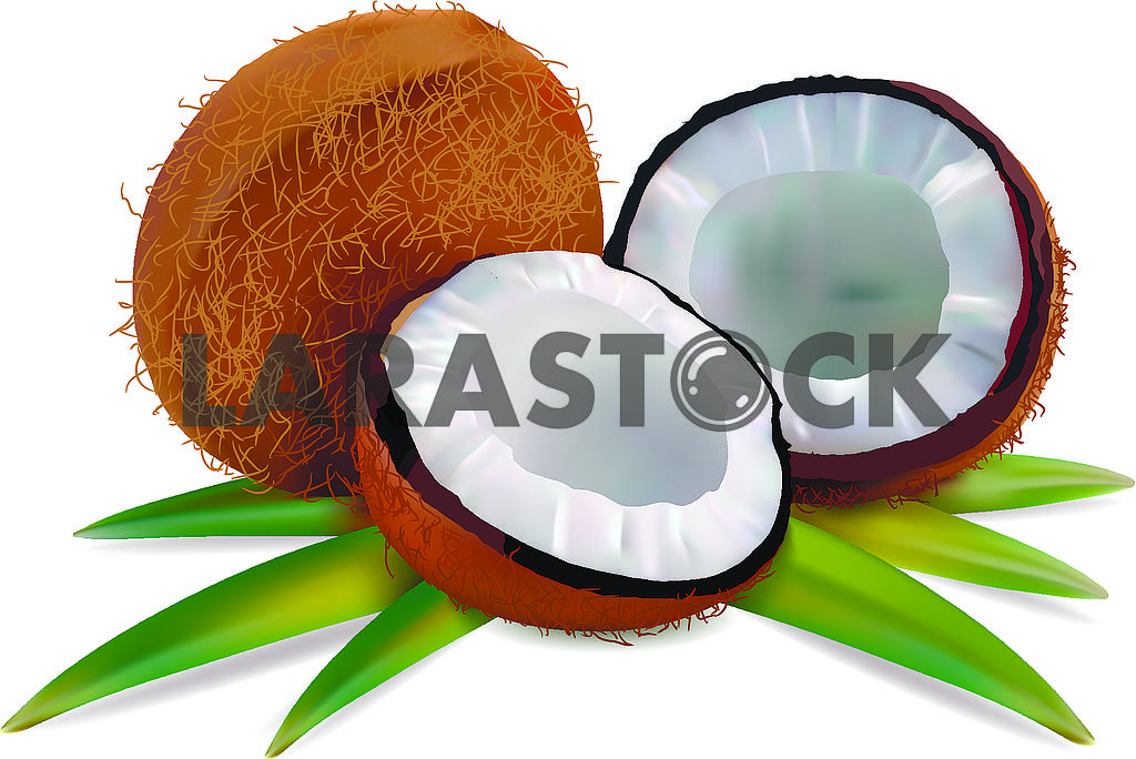 Coconut with leaves — Image 71459