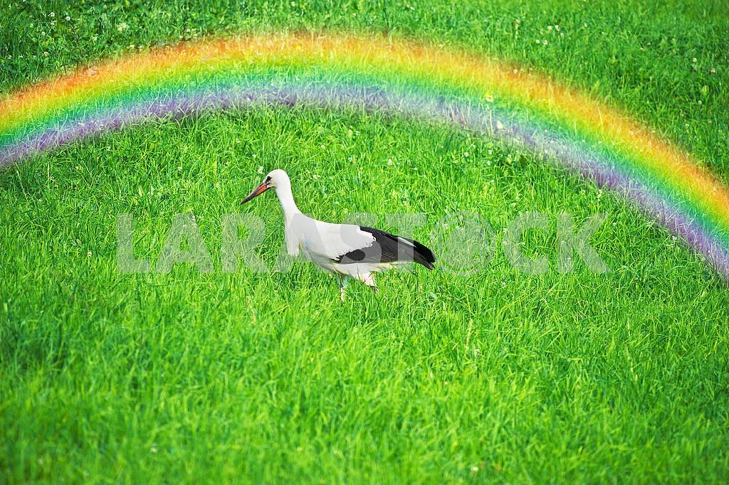 Storks in the Carpathians — Image 71552