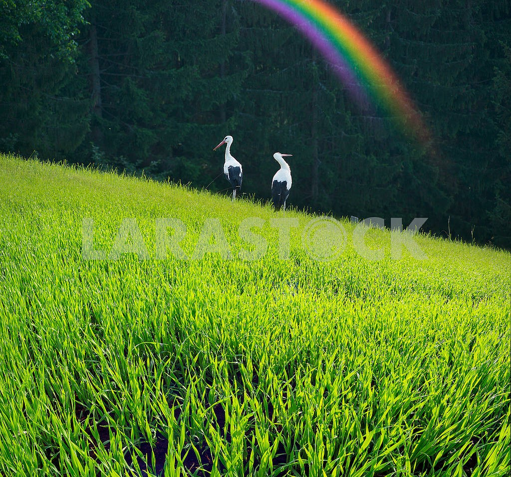 Storks in the Carpathians — Image 71555