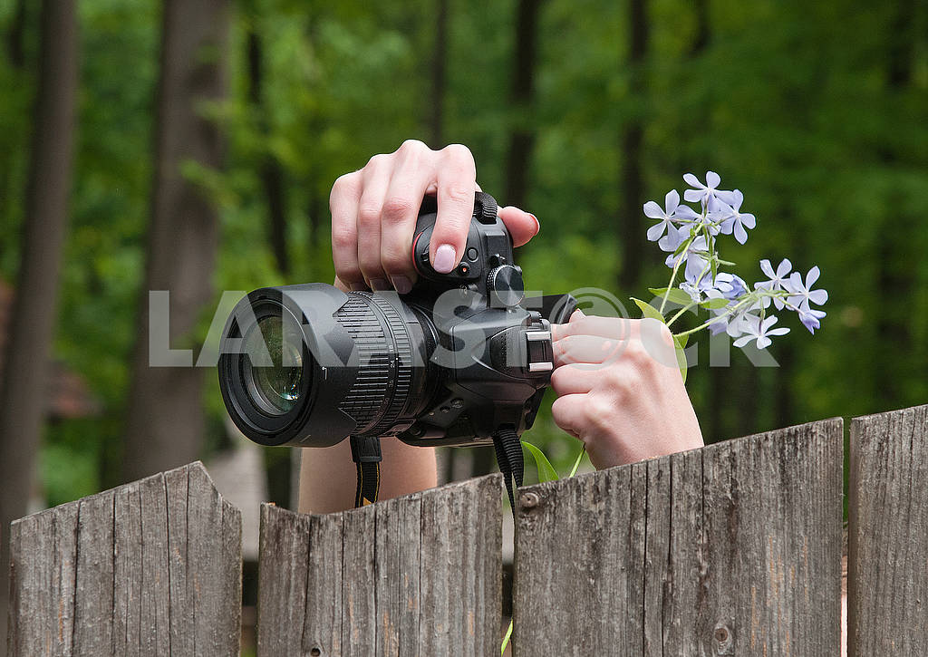 Photographer are taking pictures of nature. Green forest. — Image 71560