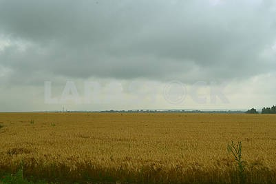 Steppe in bad weather