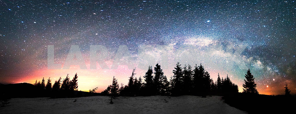 Milky Way over the Fir-trees — Image 71712