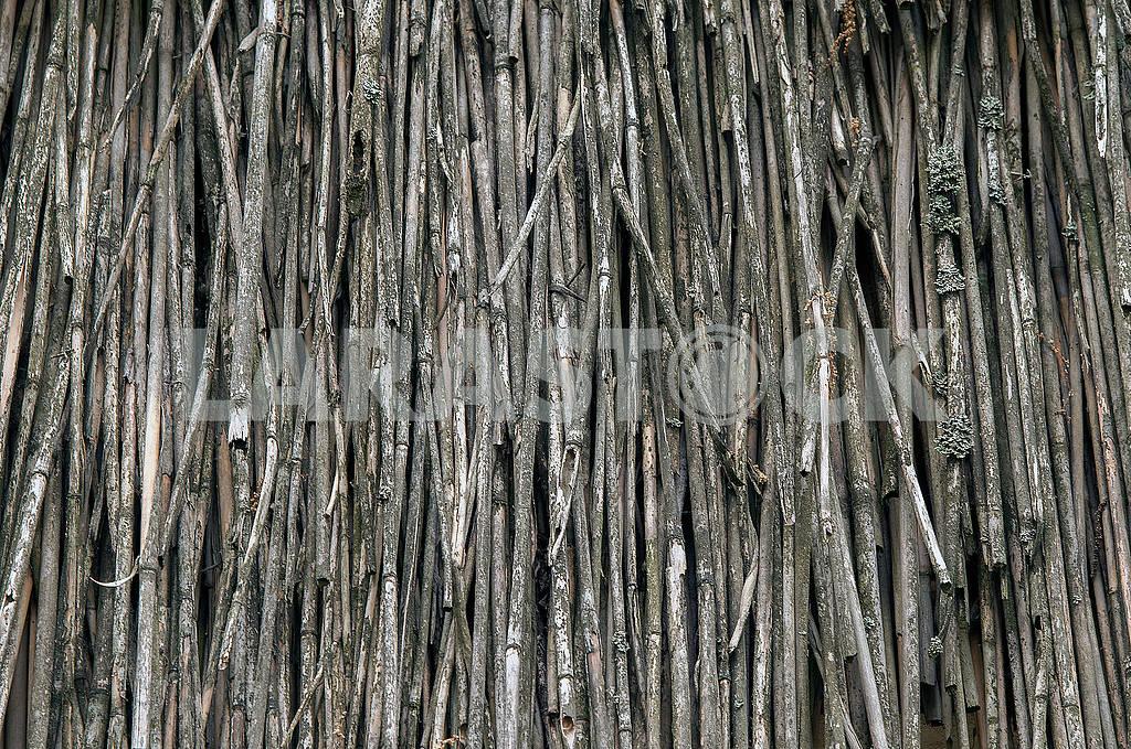 Естественный абстрактный серый фон, текстура сухих камышей. — Изображение 71730