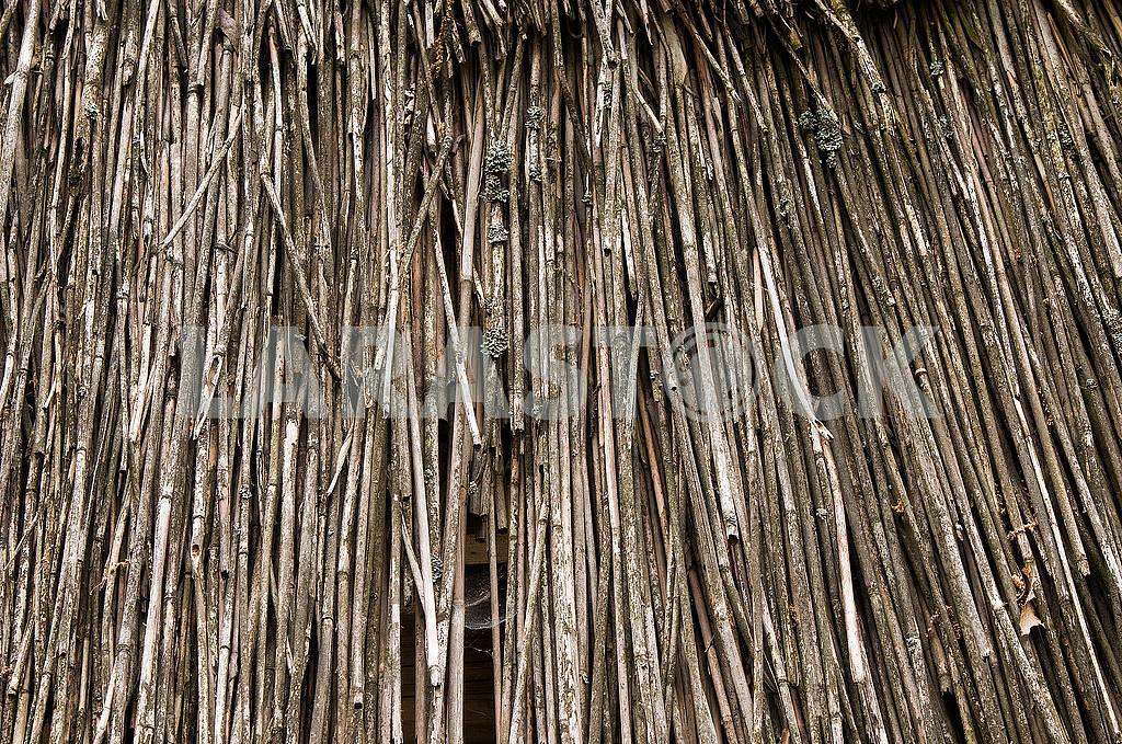 Естественный абстрактный фон, текстура сухих камышей. — Изображение 71731