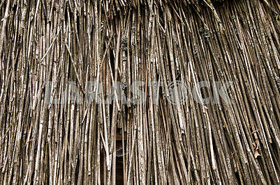 Natural abstract  background, texture of the dry reeds.