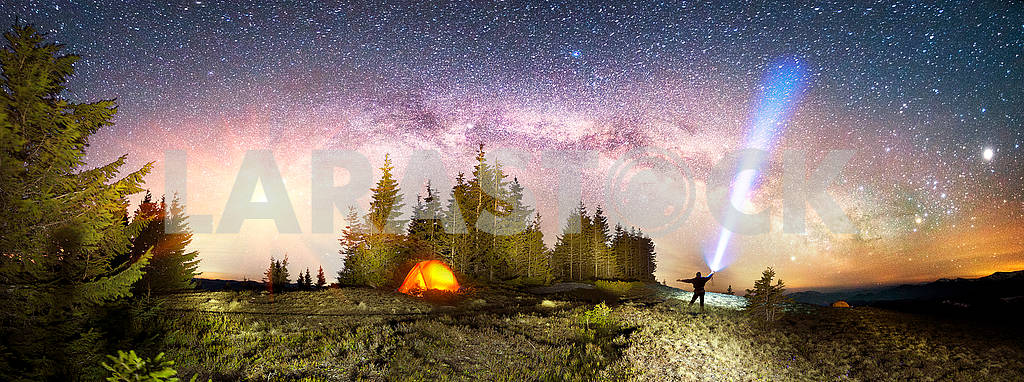 Milky Way over the Fir-trees — Image 71765