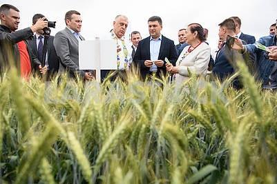 Groysman on the wheat field
