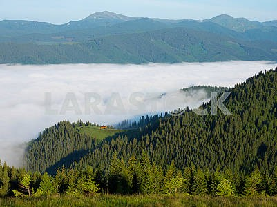 Clouds and forest in the mountains