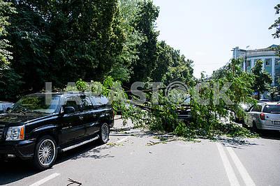 The tree fell on the car