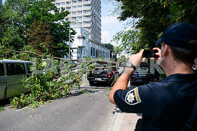 A policeman takes pictures of a fallen tree