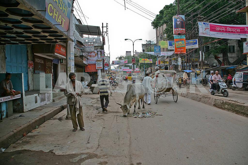 Центральная улица Варанаси с животными. — Изображение 72459