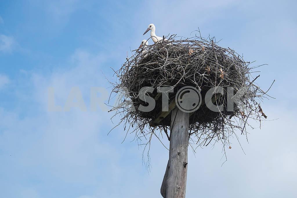 Журавли в гнезде — Изображение 72830