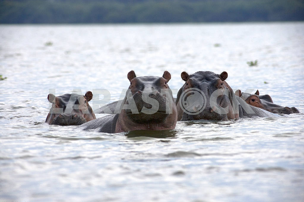 A Hippo family — Image 73
