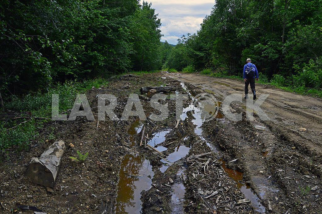 Самотній чоловік на лісовій дорозі — Изображение 73603