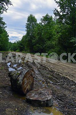Вибоїста лісова брудна дорога