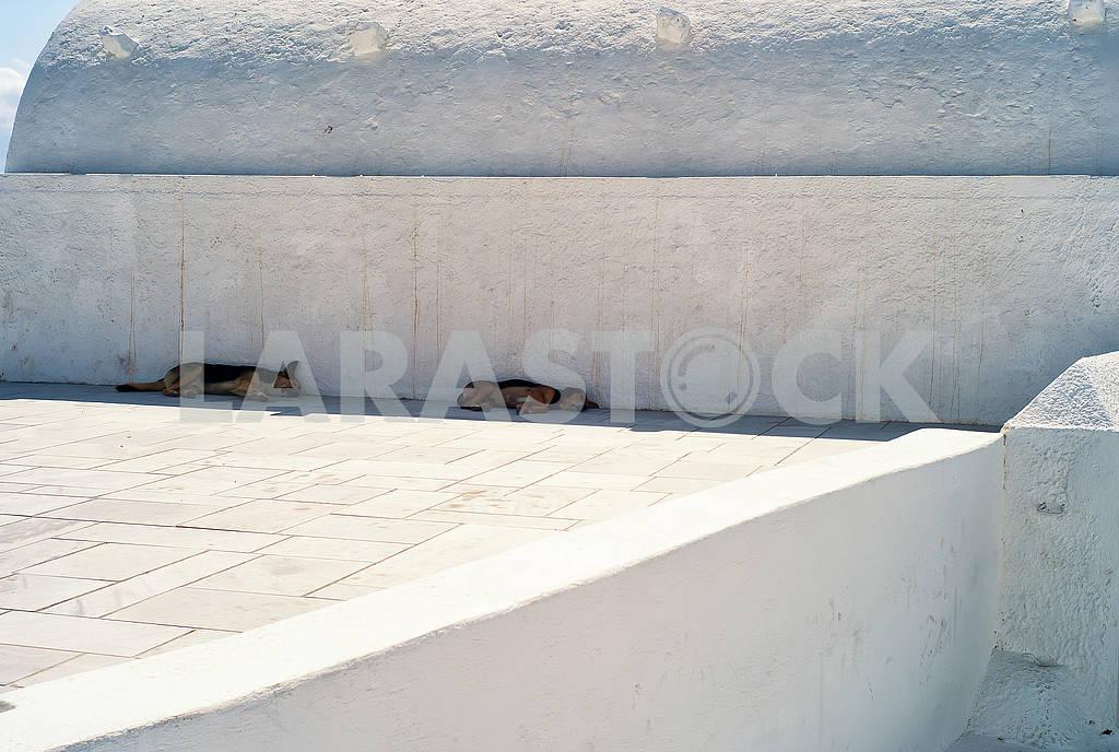 Собаки, спящие в тени — Изображение 74020