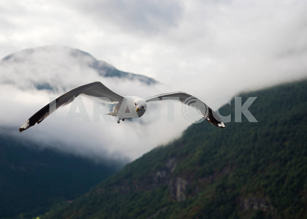 Seagull in the mountains — Image 74128