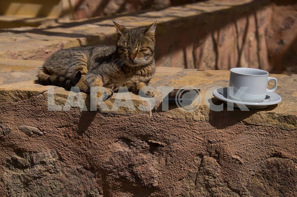 Кошка, айфон и чашка кофе — Изображение 74216