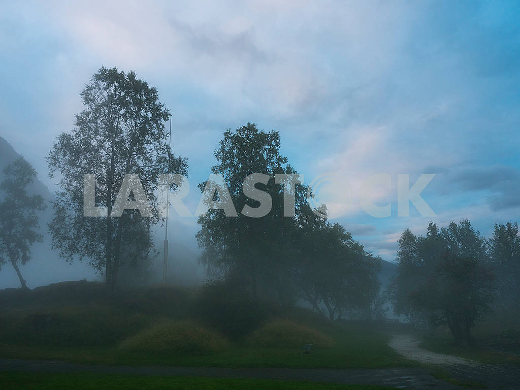 Trees in the morning mist — Image 74295