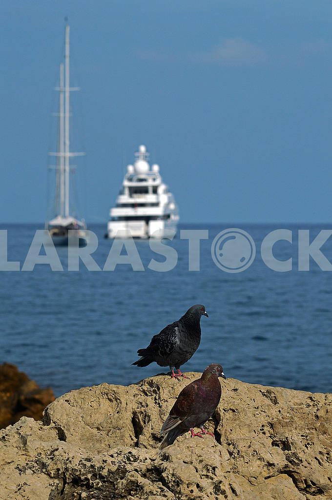 Два голуба на тлі моря — Изображение 74377