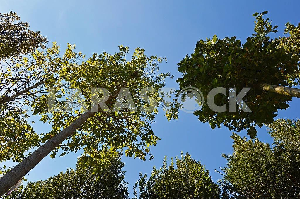 Крони декількох листяних дерев — Изображение 74419