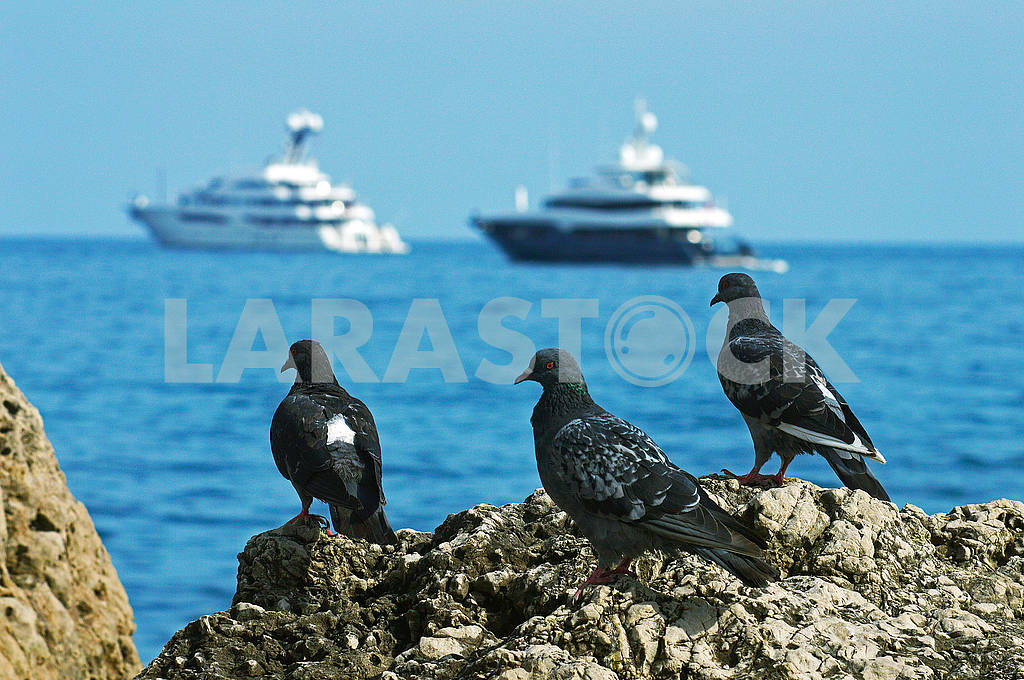 Three pigeons on the background of the sea — Image 74430